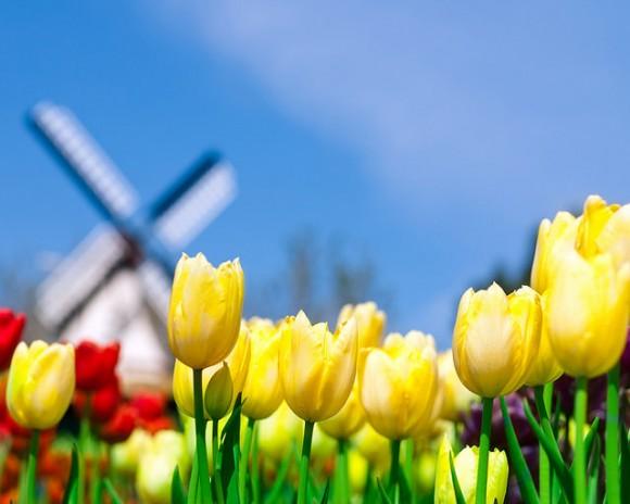 オランダの時差を分析し最高の旅行にする6つのコツ