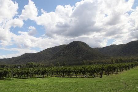ツアーじゃ行けないオーストラリアのマニアック観光10選(シドニー編)_Hunter_Valley