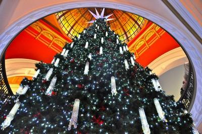 オーストラリアのクリスマスは超面白い!7つの楽しみ方!クリスマスツリー