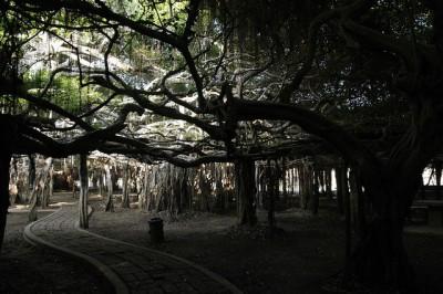 ツアーじゃいけないタイのマニアック観光地8スポット!サイ・ンガーム公園