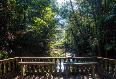 初ペナン島旅行で絶対したい超おすすめ観光8選!ペナン植物園
