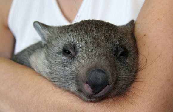 オーストラリア人の名前について7つのポイントでまとめてみた!