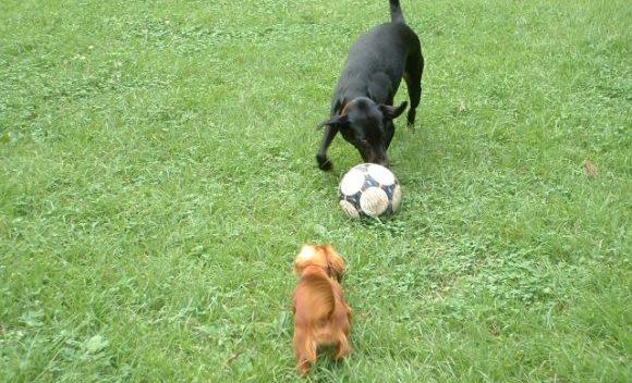 ドイツ語でスポーツ観戦!サッカー等でよく使うフレーズ15選!