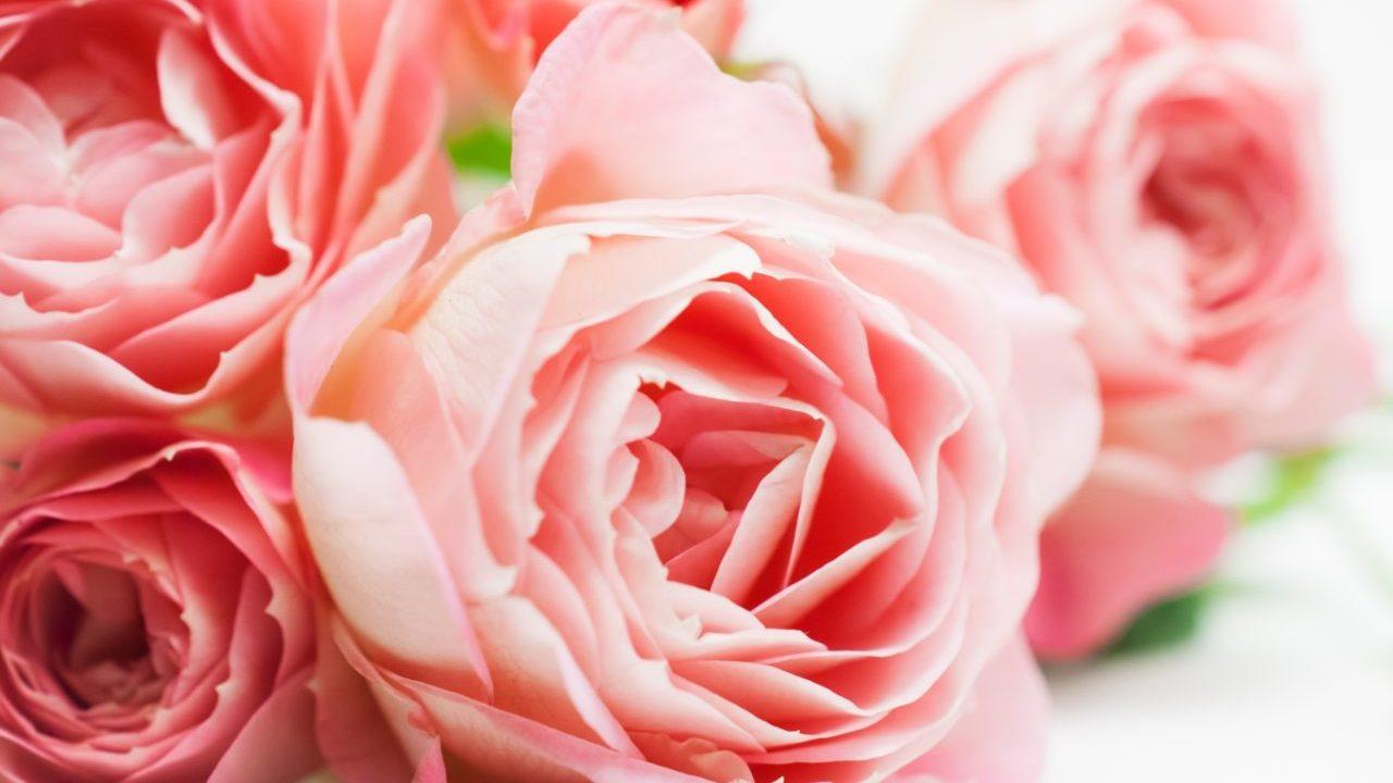 タイのバレンタインデー!在住経験者に聞く7つのおもしろ知識!