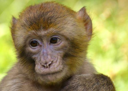 英語で動物の鳴き声オノマトペ!おもしろ擬音語20選!3