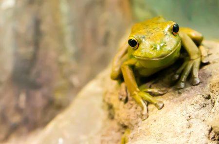 英語で動物の鳴き声オノマトペ!おもしろ擬音語20選!16