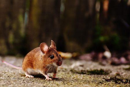 ドイツ語で動物の鳴き声オノマトペ!おもしろ擬声語20選!12