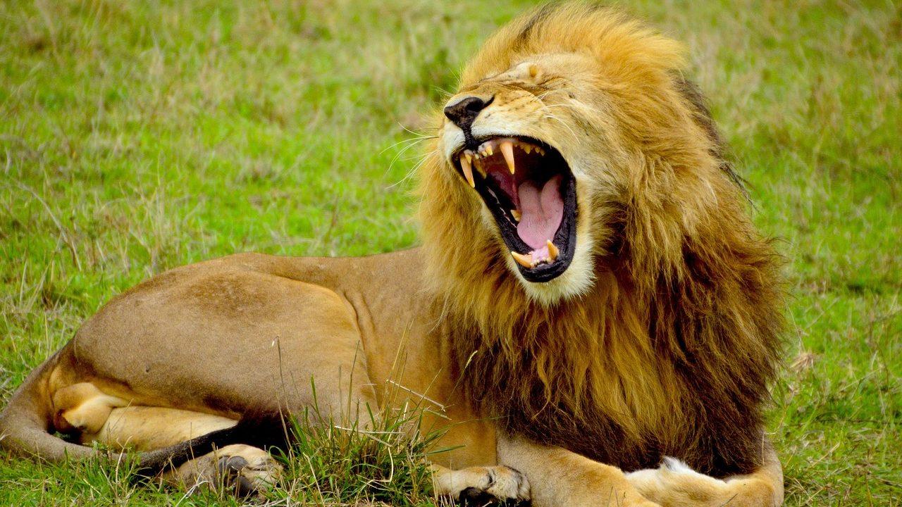 英語で動物の鳴き声オノマトペ!おもしろ擬音語20選!