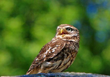イタリア語で動物の鳴き声オノマトペ!おもしろ擬音語20選!14