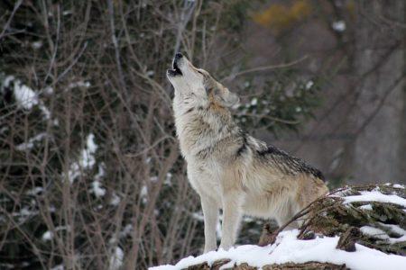 イタリア語で動物の鳴き声オノマトペ!おもしろ擬音語20選!4