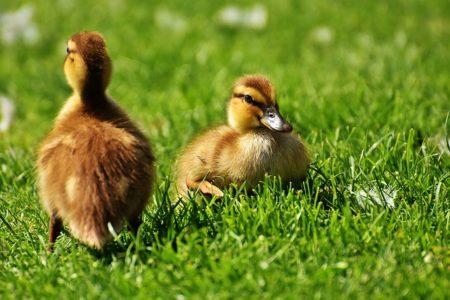 英語で動物の鳴き声オノマトペ!おもしろ擬音語20選!20