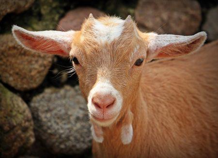 イタリア語で動物の鳴き声オノマトペ!おもしろ擬音語20選!8