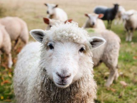 イタリア語で動物の鳴き声オノマトペ!おもしろ擬音語20選!7