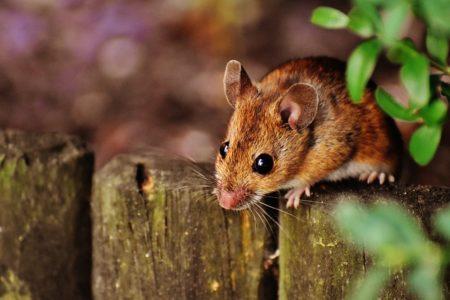 英語で動物の鳴き声オノマトペ!おもしろ擬音語20選!12