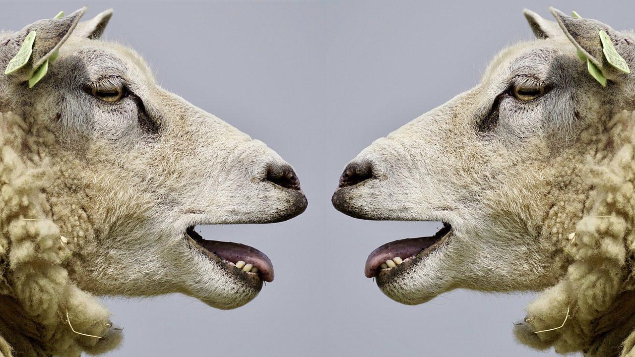ドイツ語で動物の鳴き声オノマトペ!おもしろ擬声語20選!