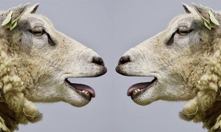 英語で動物の鳴き声オノマトペ!おもしろ擬音語20選!6