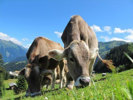 ドイツ語で動物の鳴き声オノマトペ!おもしろ擬声語20選!4
