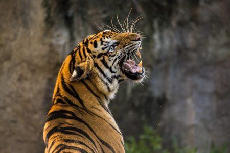 イタリア語で動物の鳴き声オノマトペ!おもしろ擬音語20選!2