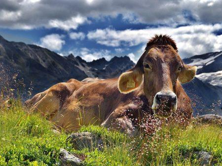イタリア語で動物の鳴き声オノマトペ!おもしろ擬音語20選!5