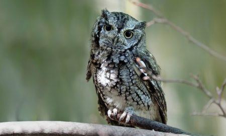 英語で動物の鳴き声オノマトペ!おもしろ擬音語20選!14