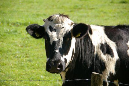 フランス語で動物の鳴き声オノマトペ!おもしろ擬声語20選!3