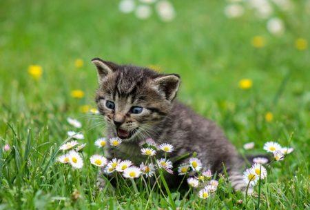 フランス語で動物の鳴き声オノマトペ!おもしろ擬声語20選!1