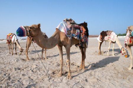 カタールのお天気調査!旅行前に知りたいベストシーズンと7つの特徴!2