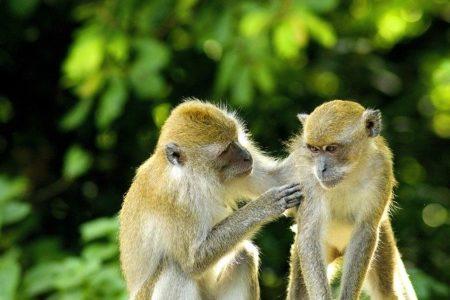 タイ語で動物の鳴き声オノマトペ!おもしろ擬音語20選!2