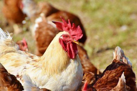 トルコ語で動物の鳴き声オノマトペ!おもしろ擬音語20選!5