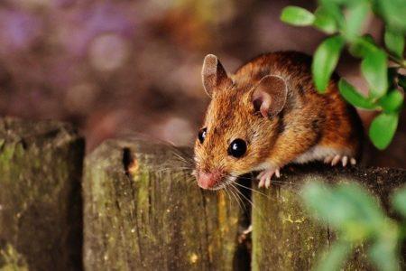 タイ語で動物の鳴き声オノマトペ!おもしろ擬音語20選!6