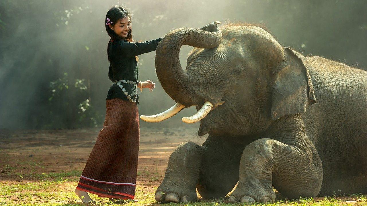 タイ語で動物の鳴き声オノマトペ!おもしろ擬音語20選!