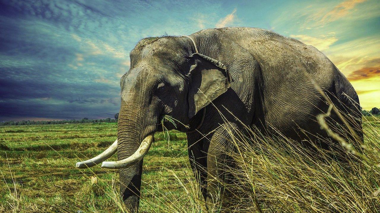 ミャンマー語で動物の鳴き声オノマトペ!おもしろ擬音語20選!